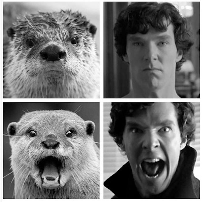 Otter versus Man: The Final Battle