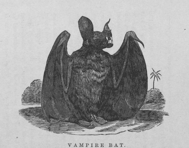 A Bayesian bat.